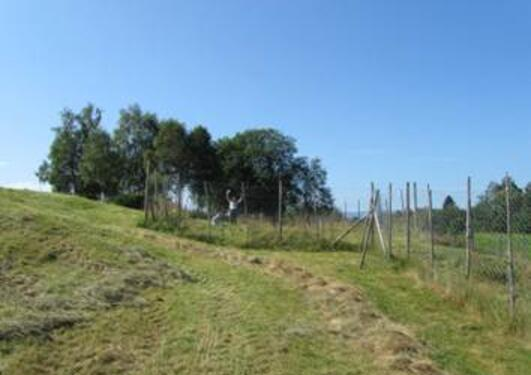 A field with a few trees at the top and a fence to the right