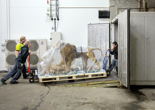 dyrene forlater dyremuseet