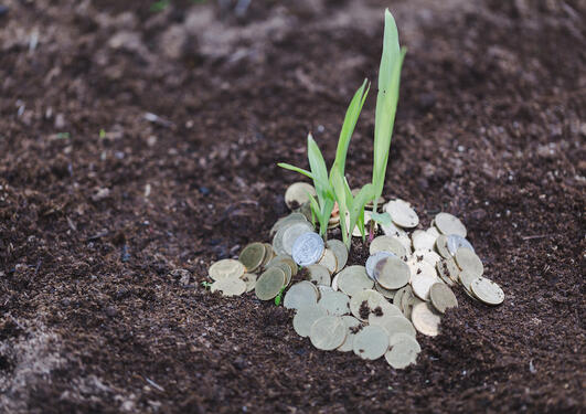 coins and a plant