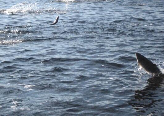Foto av fisk