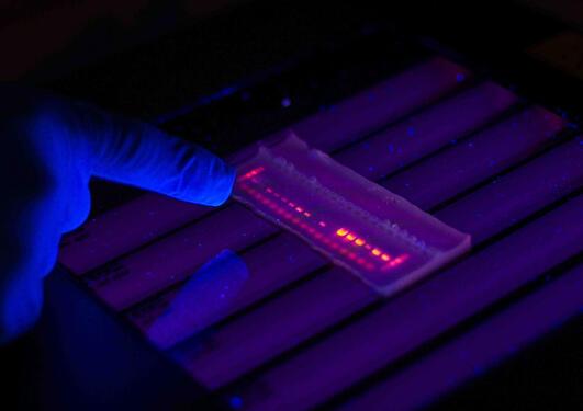 gel fluorescent