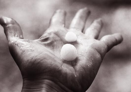 Hail lay on human palm black and white photo