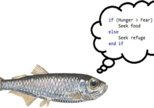 Fisk som føler sult eller frykt