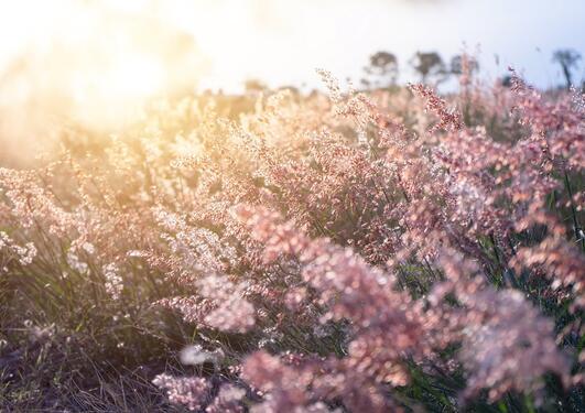 Blomster i solnedgang