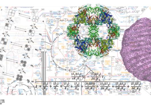 illustrasjonsbilde av metabolisme og enzymer