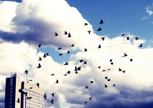 Bilde av fugler som flyr