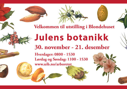Julens botanikk er en utstilling om julens planter