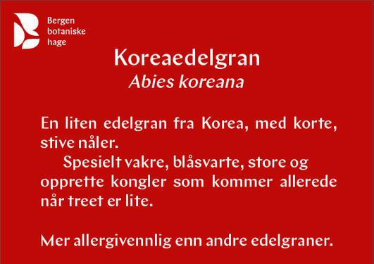 Koreaedelgran
