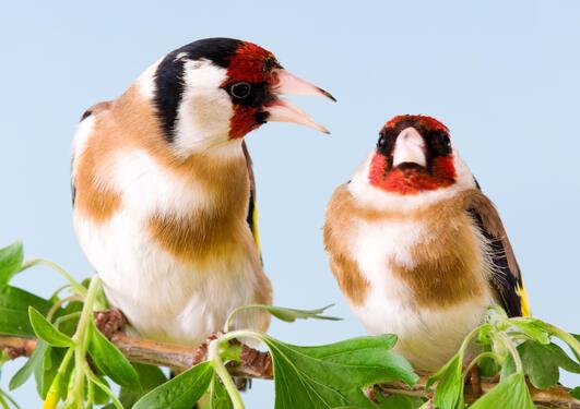 To sisiker der den ene ser ut til å argumentere overfor den andre som ser litt morsk ut i bakgrunnen