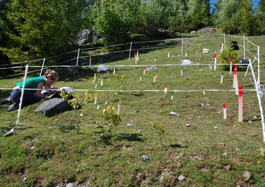 A plot of grassland with coloured sticks to mark the areas of the plot