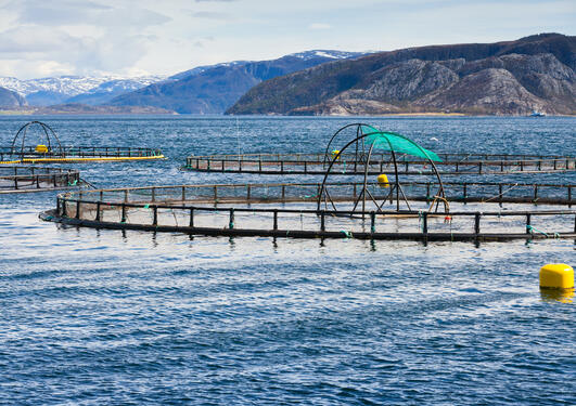 Illustrasjonsbilde av fiskeoppdrettsmerder