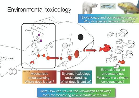 Korleis alt heng saman - mekanistisk, system- og miljøtoksikologi