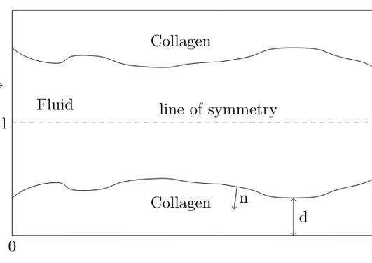 Collagen porous media