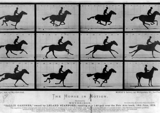 Grid of twelve black and white photos of a horse galloping.