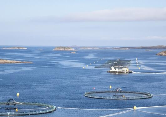 Bilde av akvakultur Frøya