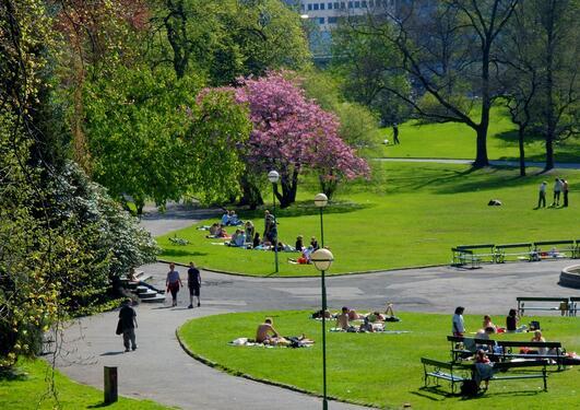 Sommer og folk som soler seg i Nygårdsparken