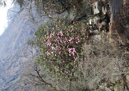 Bilde fra Nepal