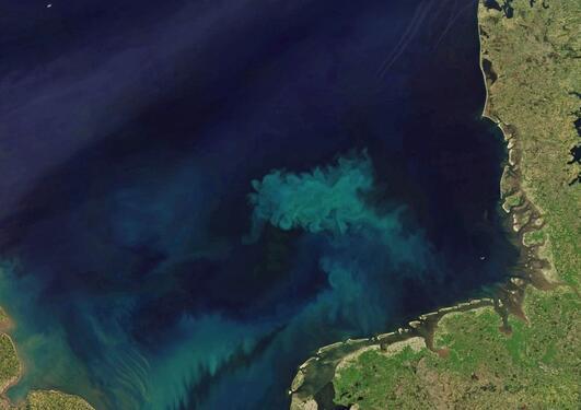 Satellittfoto av planktonoppblomstring i Nordsjøen
