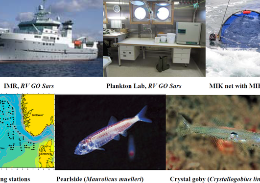 Master project in over-wintering pelagic juvenile fish