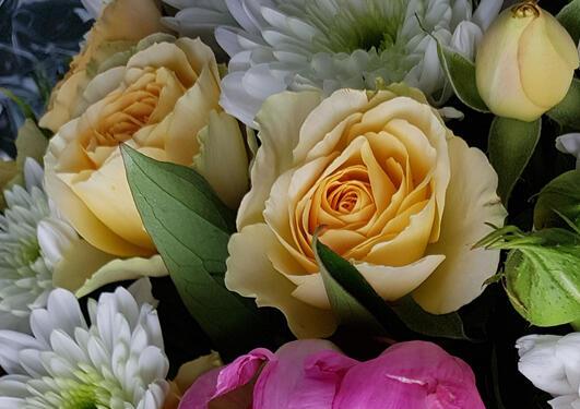 Yellow roses 1
