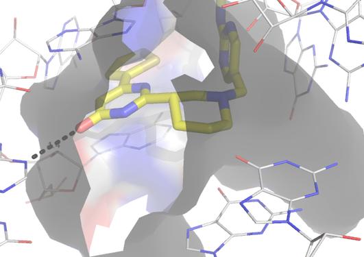 Ribocil bound to FMN riboswitch