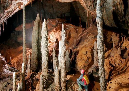 Robbie Shone grotten