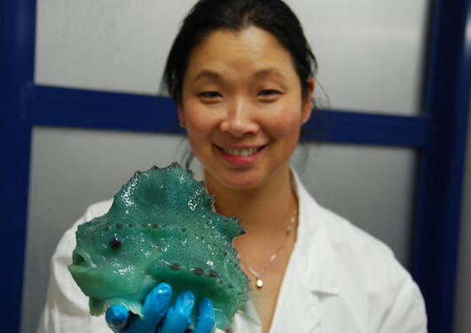 Researcher Gyri Teien Haugland of UiB's Department of Biology holds a lumpfish. She has received a grant to study vaccines for lumpfish to fight sea lice.