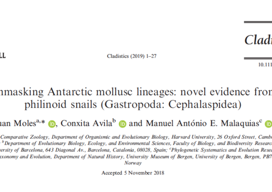 Unmasking Antarctic mollusc lineages: novel evidence from philinoid snails (Gastropoda: Cephalaspidea)