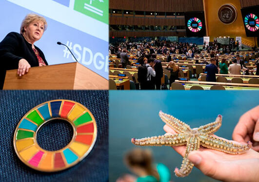 Collage of four photos showing various SDG related activities at the University of Bergen and United Nations.