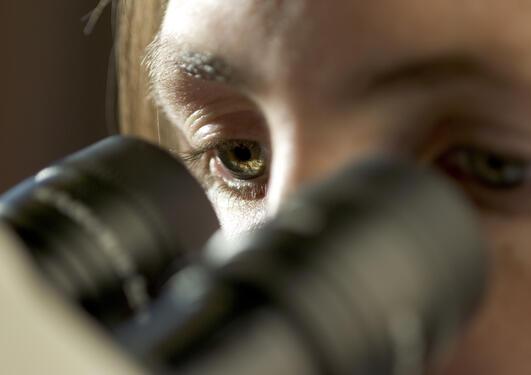 Illustrasjonsbilete, mikroskop