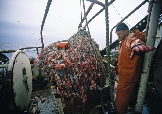 Fisketråler med nett full av fangst