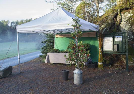 Pyntegrønt selges fra telt nær Blondehuset og i Botanisk hage.