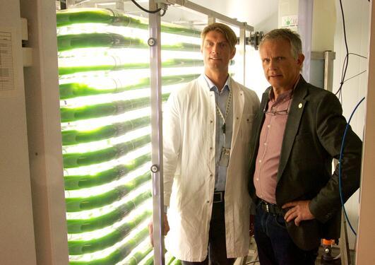TESTER UT LOVENDE ALGER: Forskningsdirektør på Uni Research og førsteamanuensis II på UiB, Hans Kleivdal (t. v.) og Anders Goksøyr, professor ved UiB, foran laboratorieanlegget på Institutt for biologi.