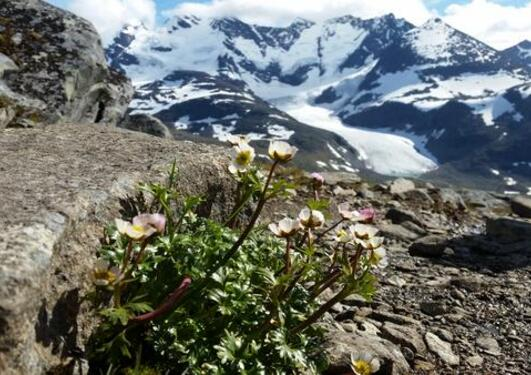 Mountaine flowers