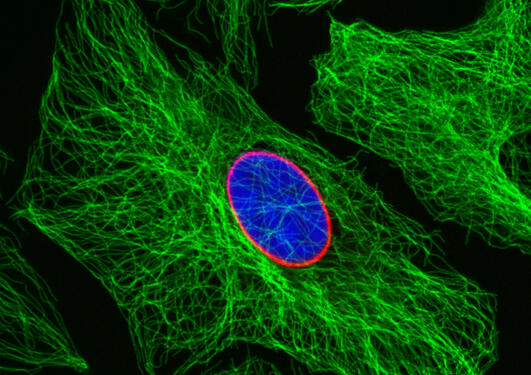 Confocal image of cells
