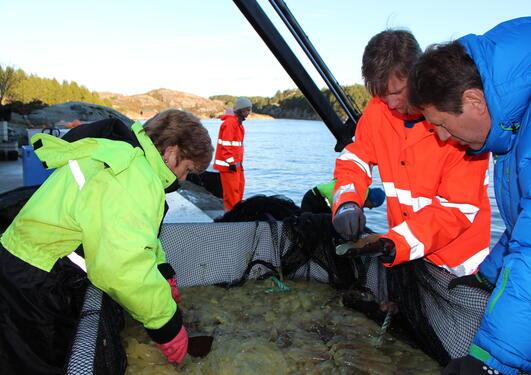 Tre mennesker inspiserer fangsten av sekkedyr