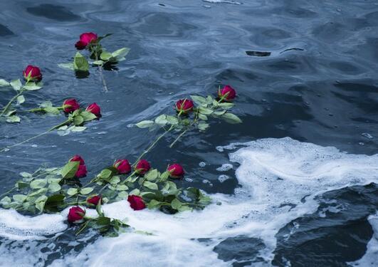Roser i hav