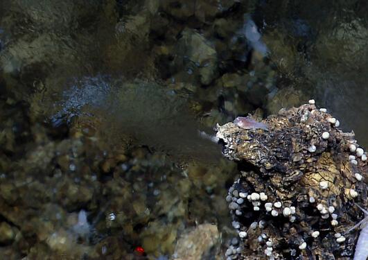 Vent shrimp and gastropods