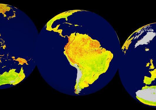 Et verdenskart som viser en ny målemekanisme, Vegetation Sensitivity Index (VSI).