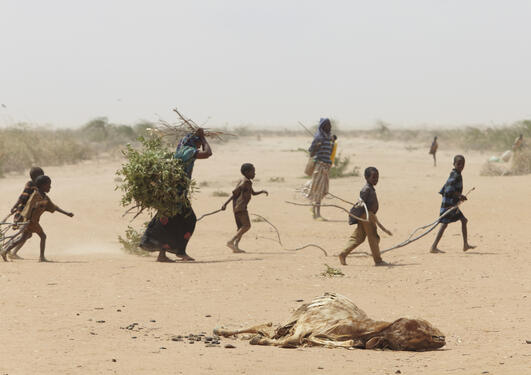 east africa - a family gathers sticks and branches for firewood
