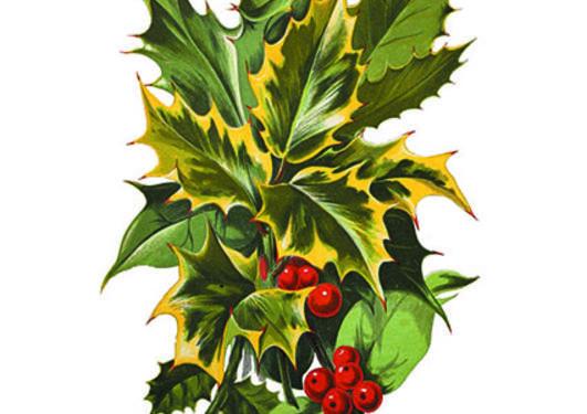 Ilex aquifolium fra The floral world and garden guide, vol. 17 (1874).