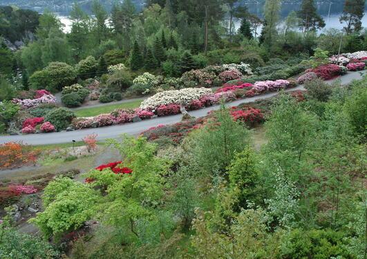 Deler av kultivarsamlingen under blomstring i mai.