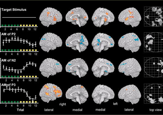 AM-correlated fMRI results. Render views and maximum-intensity projections of...