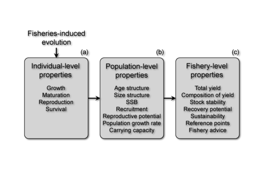 Fisheries-induced evolution impacts life-history traits and other individual...