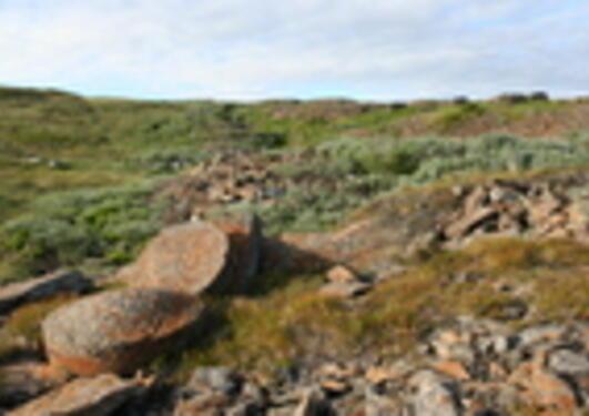 Kvernstein på huggeplass i Skarvan-Roltdalen nasjonalpark ved Selbu. I...