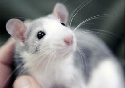 Etikk og dyrevelferd er en viktig del av arbeidet på Dyreavdelingen