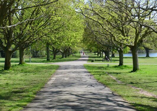 Fine parkområder kan gi god avkobling i en travel studiehverdag