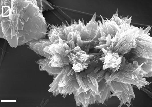 Partiklane som er funne på opptil 1000 meters djup gjer havet surare.