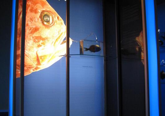 """Utstillingen """"Deeper than light"""" ble produsert av Bergen Museum, og trakk..."""