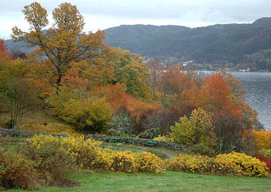 Arboretet   Universitetshagene   Universitetet i Bergen